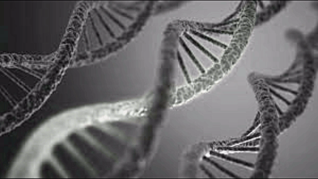 spliced DNA in Your Food @ ToxicNow.com